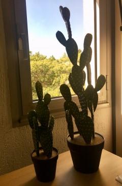 Cactus Plat