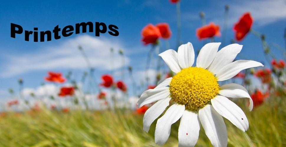 """C'est le printemps! Votre jardin à besoin de vous ;-) Hello """"spring""""!"""